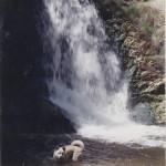 Peachland waterfall dog