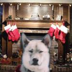Christmas Max 3